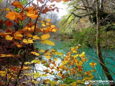 Parques Naturales Urbasa-Andía y Aralar - Nacedero del Urederra; viajes puente almudena